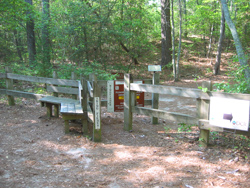 a trail entrance off of the Cape Henry Trail